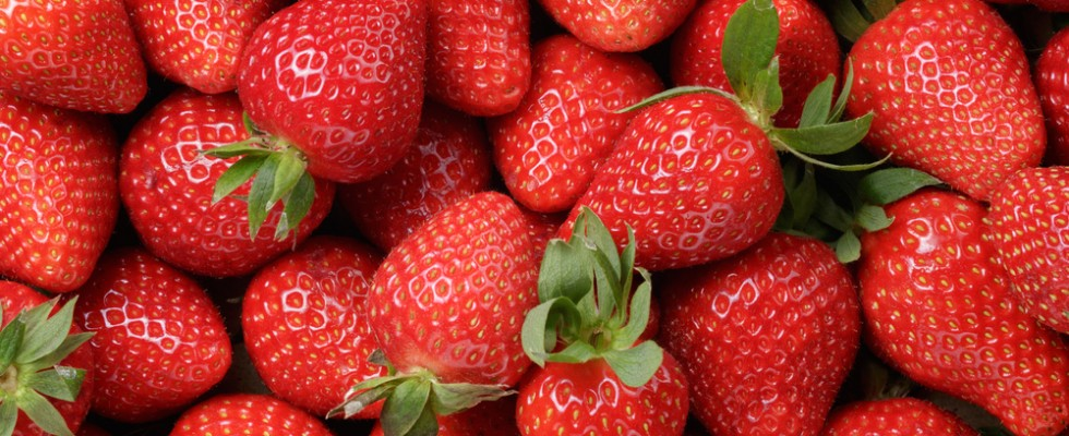 Mille e una fragola: le tipologie di fragole da gustare
