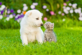 7 cibi che NON devi dar da mangiare al tuo cane o gatto
