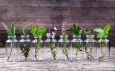 13 erbe officinali da coltivare a casa