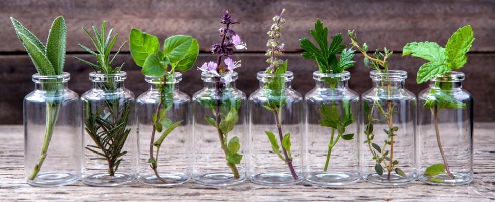 Le 13 erbe officinali da coltivare a casa