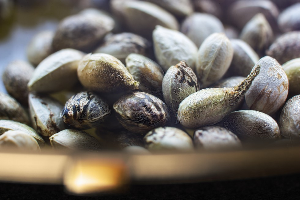 18 tipi di semi oleosi e le loro proprietà - Foto 17