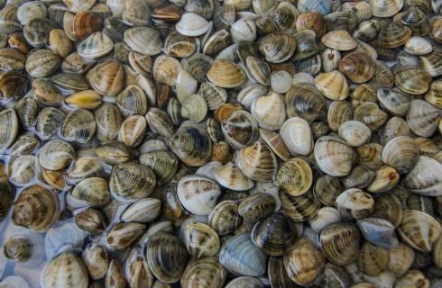 Pesca delle vongole: cambia la legge