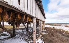Dal freddo nord: la cucina islandese