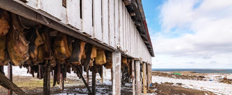 Gusti forti e insoliti: la cucina islandese