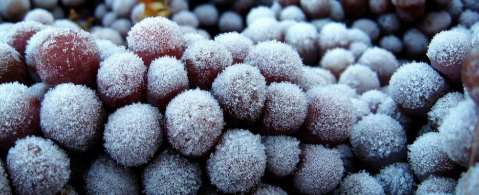 Il fascino gelido degli Icewine