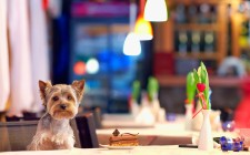 9 ristoranti dog-friendly a Roma
