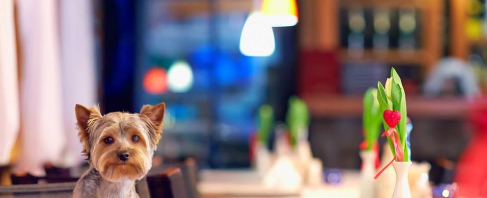 Agosto – Dog friendly: dove mangiare a Roma