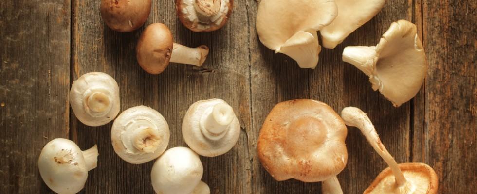 Sapore d'autunno: i più amati funghi italiani