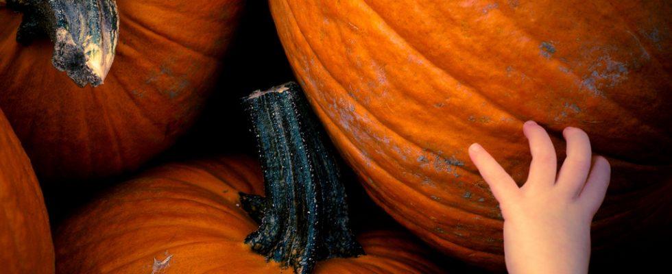 I sandwich di Halloween per la festa dei bambini: le ricette