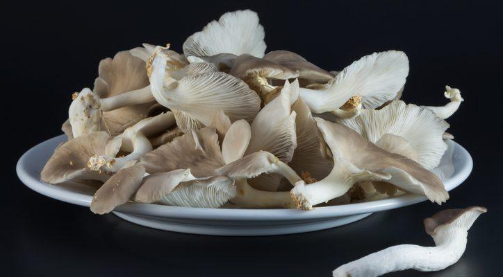 Le cotolette di funghi con la ricetta vegan