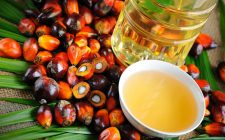 I 10 più noti sostitutivi dell'olio di palma