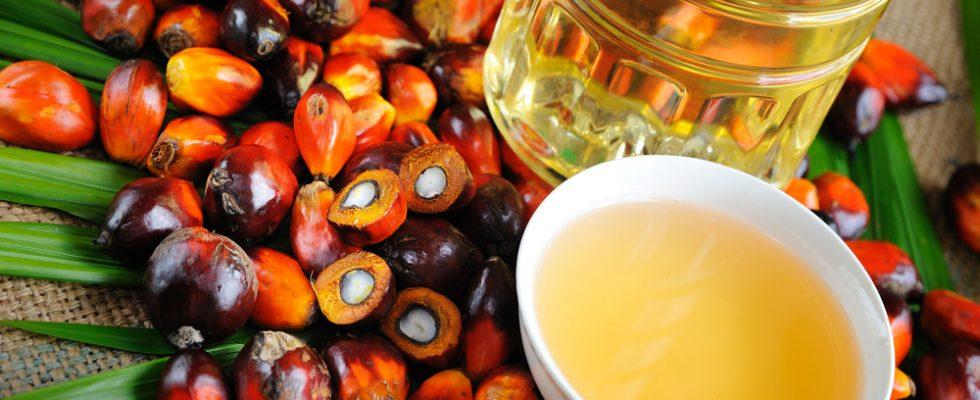I 10 principali sostitutivi del temuto olio di palma