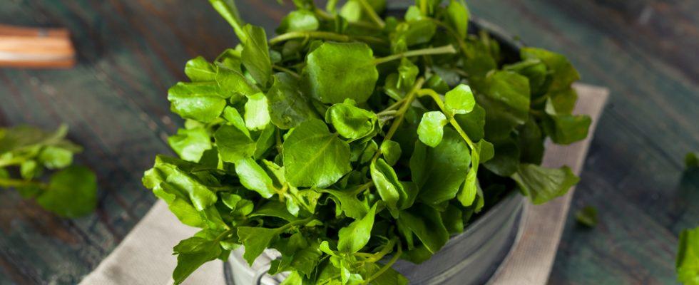 Nasturzio: tutti gli usi in cucina di una pianta particolare