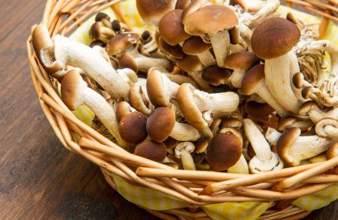 I maltagliati con funghi chiodini, la ricetta del primo di stagione