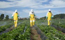 Frutta e verdura: attenzione ai pesticidi