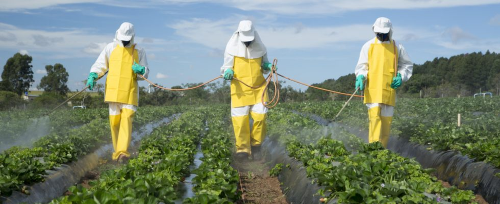 Frutta e verdura: fate attenzione ai troppi pesticidi