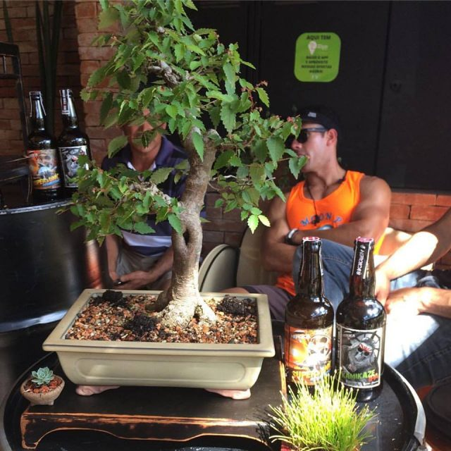 birra-bonsai-3