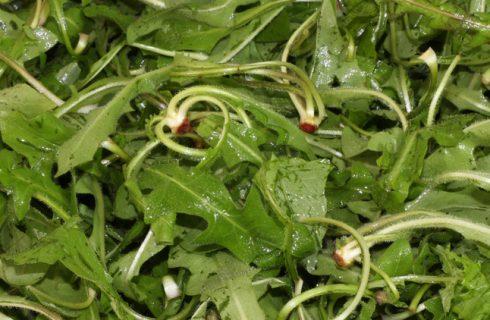 Come si prepara la cicoria in padella alla siciliana