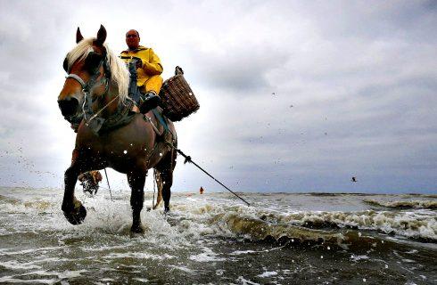 Arti antiche: la pesca dei gamberetti a cavallo