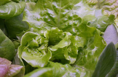 Radicchio verde bollito: la ricetta del contorno light