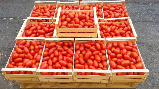cassette di pomodori