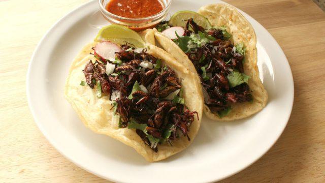 tacos-de-chapulines