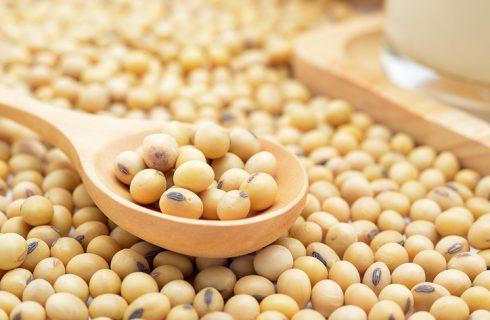 Come preparare i fagioli di soia in umido