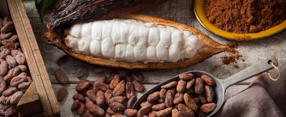 Grue di cacao: cos'è, da dove viene e come si usa