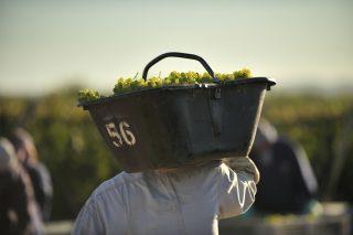 Facciamo chiarezza sul vino naturale: intervista ad Antonio Marino di Les Vignerons