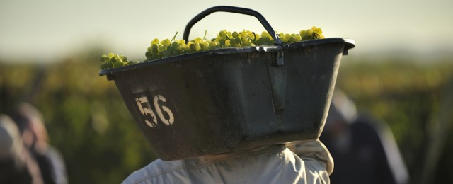 Fare chiarezza: cos'è il vino naturale?