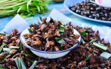 2018: gli insetti arrivano nei nostri piatti