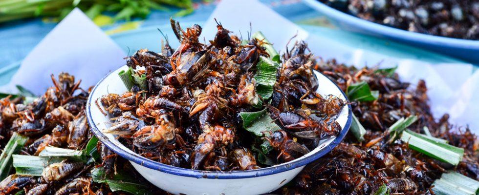 Dal 2018 gli insetti arriveranno sulle nostre tavole