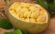 Jackfruit: un insolito sostituto della carne