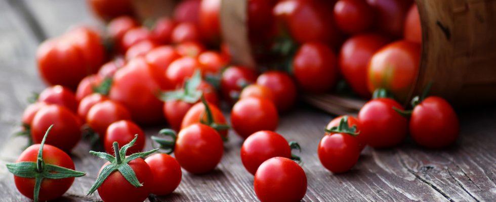 Pomodori insapore? Tutta colpa di un gene andato perso