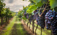 Vini naturali: a Genova per VinNatur 2018