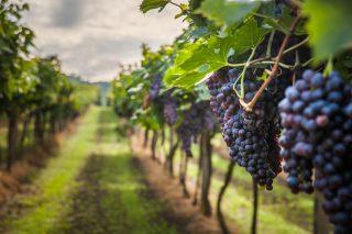 Genova: a Gennaio ci sono i vini naturali di VinNatur 2018