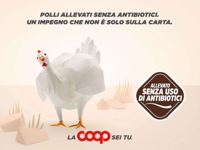 pollo-coop