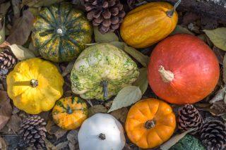 Per l'autunno: piccola guida alle varietà di zucca e come utilizzarle in cucina