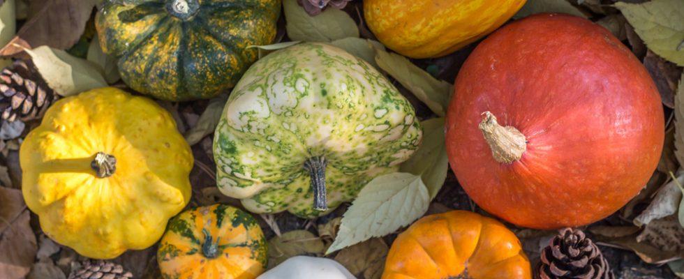 Pianta Di Zucca Di Halloween.Tipi Di Zucca Quali Sono E Come Usarle In Cucina Agrodolce