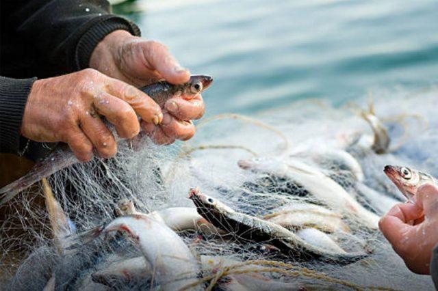 mediterraneo_pesca