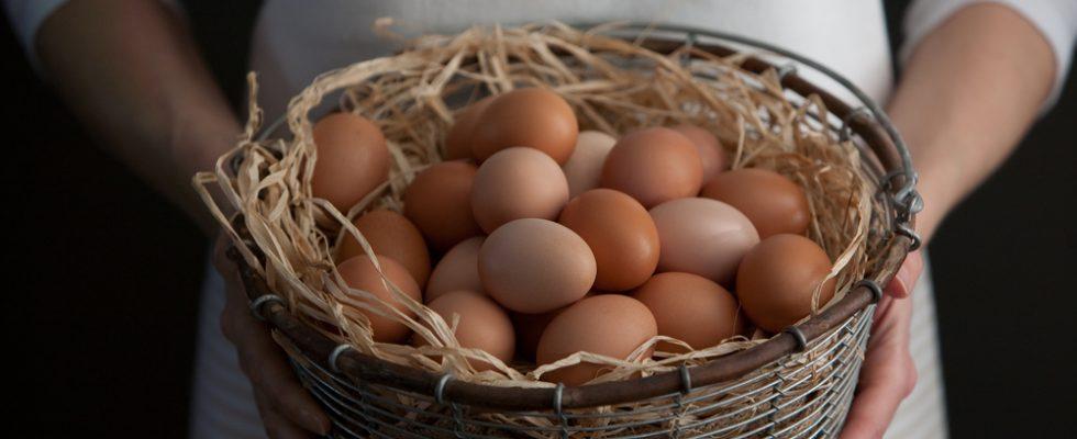Uova: carenza nei supermercati a causa dello scandalo fipronil