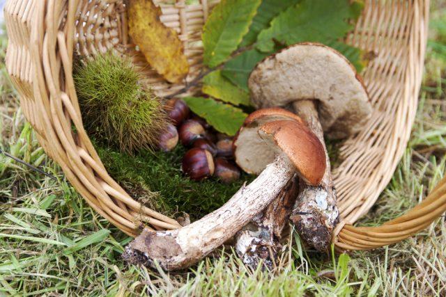 funghi castagne
