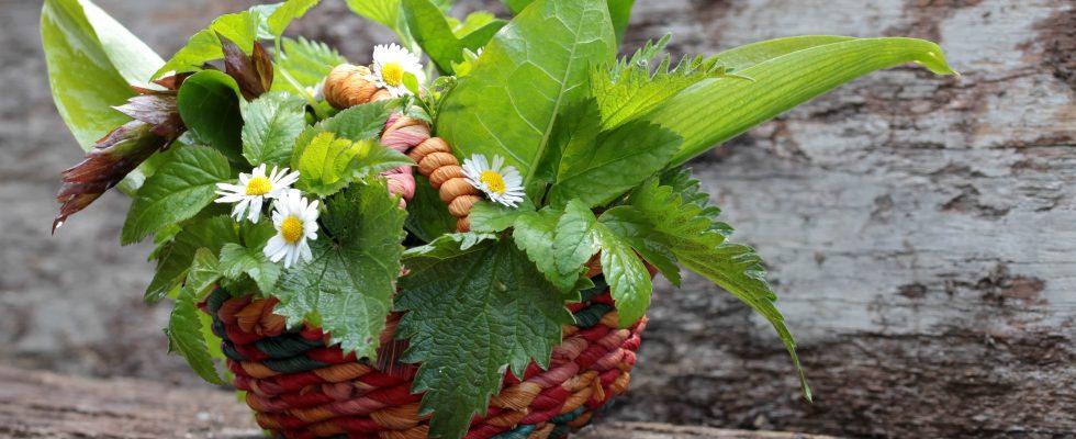 7 erbe selvatiche da raccogliere e usare in cucina