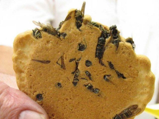 biscotti-con-gli-insetti-wasp_crackers1