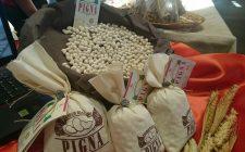 Dalla Liguria: il fagiolo bianco di Pigna