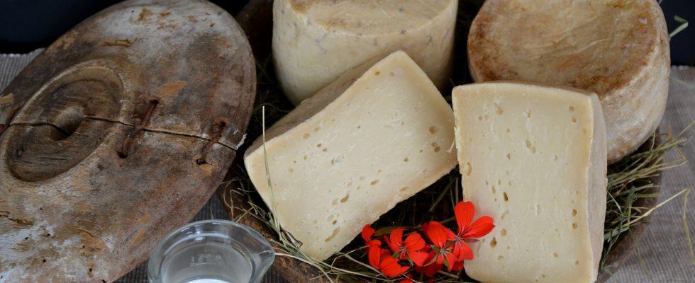 11 formaggi tradizionali da non perdere in Trentino