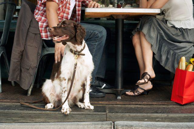 cane al ristorante
