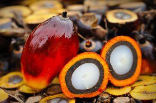 La dicitura senza olio di palma sulle etichette sarebbe ingannevole