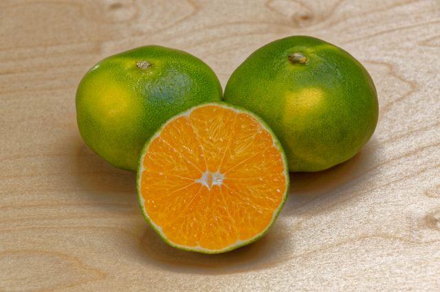 miyagawa mandarino
