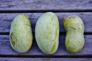 Riscoperte: 10 frutti antichi da apprezzare di nuovo